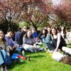 Japanese Conversation Group Meetings & Hanami Picnic