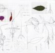 Botech Compositions: New Work by Macoto Murayama