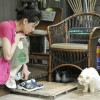 Archipelago: Exploring the Landscape of Contemporary Japanese Women Filmmakers: Rent-a-Cat   (レンタネコ)