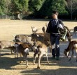 Discover Japan #8: Nara Prefecture (THE EAST Campaign in Association with Japan National Tourist Organization London Office)