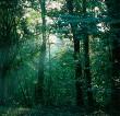 Japan's True Love of Nature: Ecologies of Hope